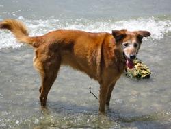 Naika , chien