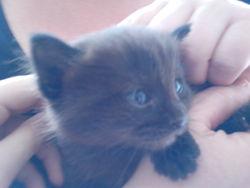 Noxy, chat Gouttière
