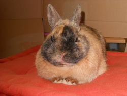 Nuage, rongeur Lapin