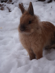 Nuts, rongeur Lapin
