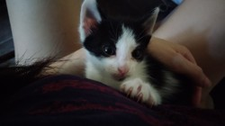 Nyo, chaton Gouttière