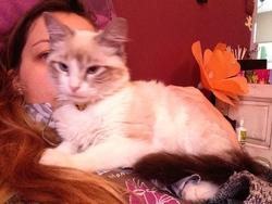 Mhysa, chat