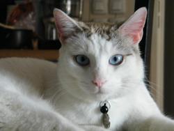 Obiwan Kenobi, chat Gouttière