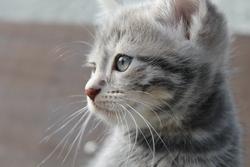 Odyssée, chat Gouttière