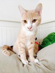 Nino , chat Gouttière
