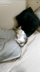 Ohana, chaton