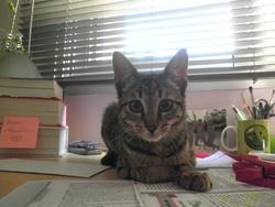 Oksa, chat Gouttière
