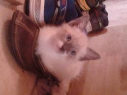 Olaf, chat