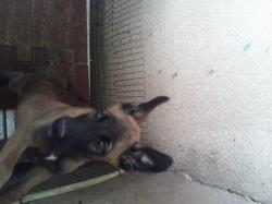 Olega, chien