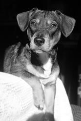 Olek, chien