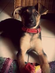 Olia, chien