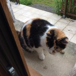 Olie, chat Gouttière
