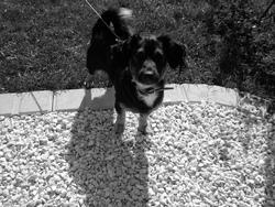 Oliver, chien