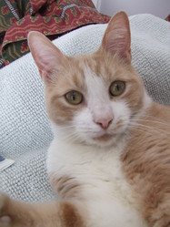 Oliver, chat