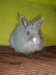 Olympe, rongeur Lapin