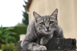 Olympe, chat