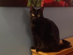 Ombrage, chat Gouttière
