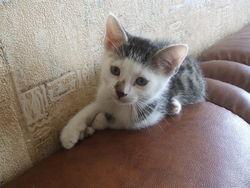 Omega, chat Gouttière