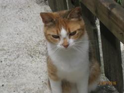 Ondine, chat