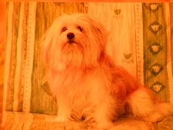 Onix, chien