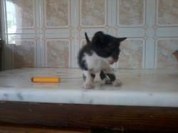 Onyx, chat Gouttière