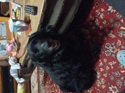Onyx, chien