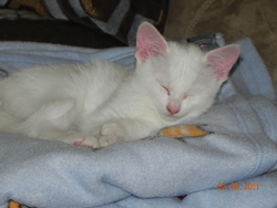 Opale, chat Gouttière