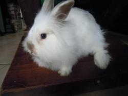 Opale, rongeur Lapin