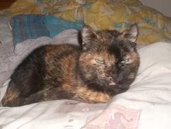 Ophelie Est Au Paradis, chat
