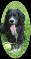 Oracle, chien Border Collie