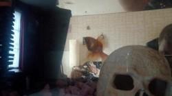 Orange - Décédé, rongeur