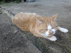 Oasis, chat Gouttière