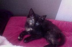 Oréa, chat Gouttière