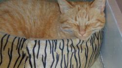 Orangeade, chat Gouttière