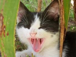 Oréo, chat Gouttière