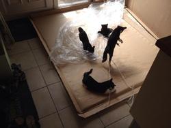 Loki, chat Gouttière