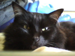 Orion, chat Gouttière