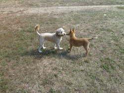 Orlane Et Winch, chien