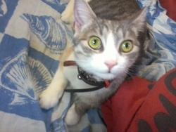 Orphée, chat Gouttière