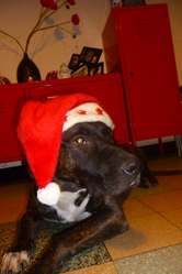 Orton, chien