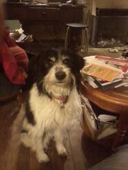 Oscar, chien