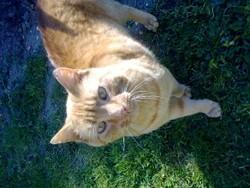 Oscar, chat Gouttière