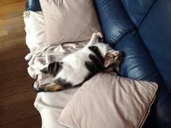 Osiris, chat Gouttière