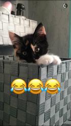 Osiris, chaton