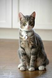 Oskar, chat Gouttière