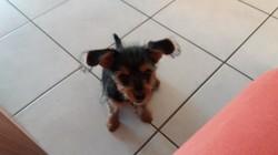 Otis, chiot