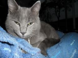 Otis, chat Gouttière
