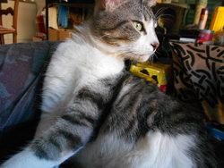 Oui-Oui, chat Gouttière