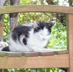 Ouistiti, chat Gouttière