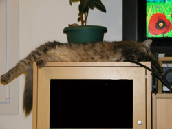 Oups, chat